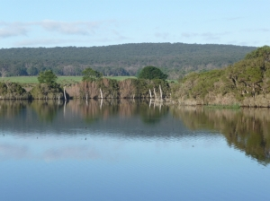 Land for Wildlife dam