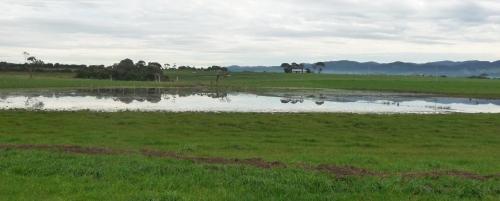 Flooded paddock 17