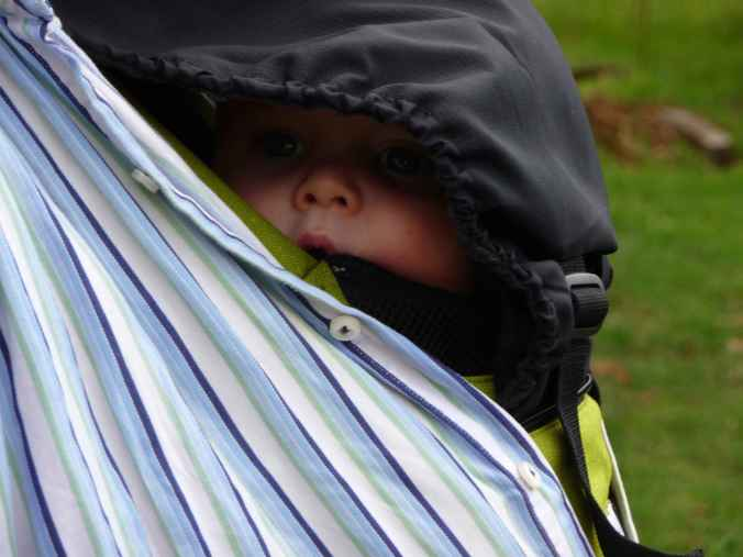 Peeping out of a baby carrier