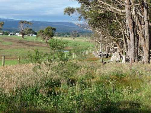 Wattles survived grazing by kangaroos
