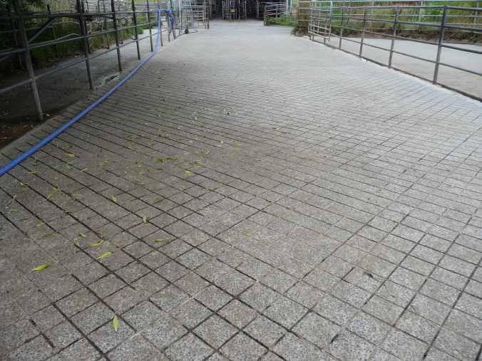 Grooved yard