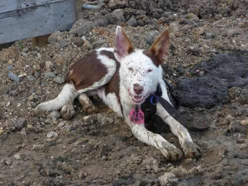 Muddy Patch