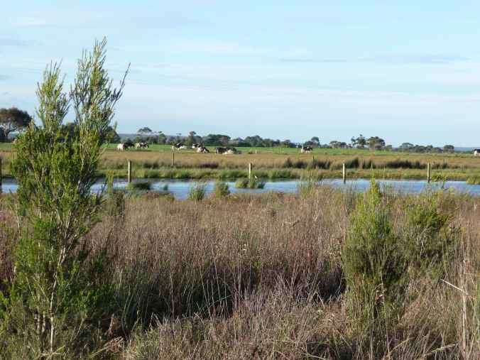 New trees in the wetland