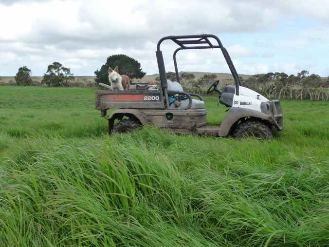 Grass ready for ensiling