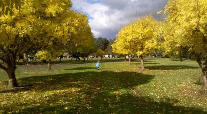 AutumnGardenAlexCowsLoRes