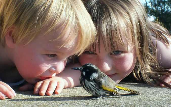 My Little People meet a young honeyeater