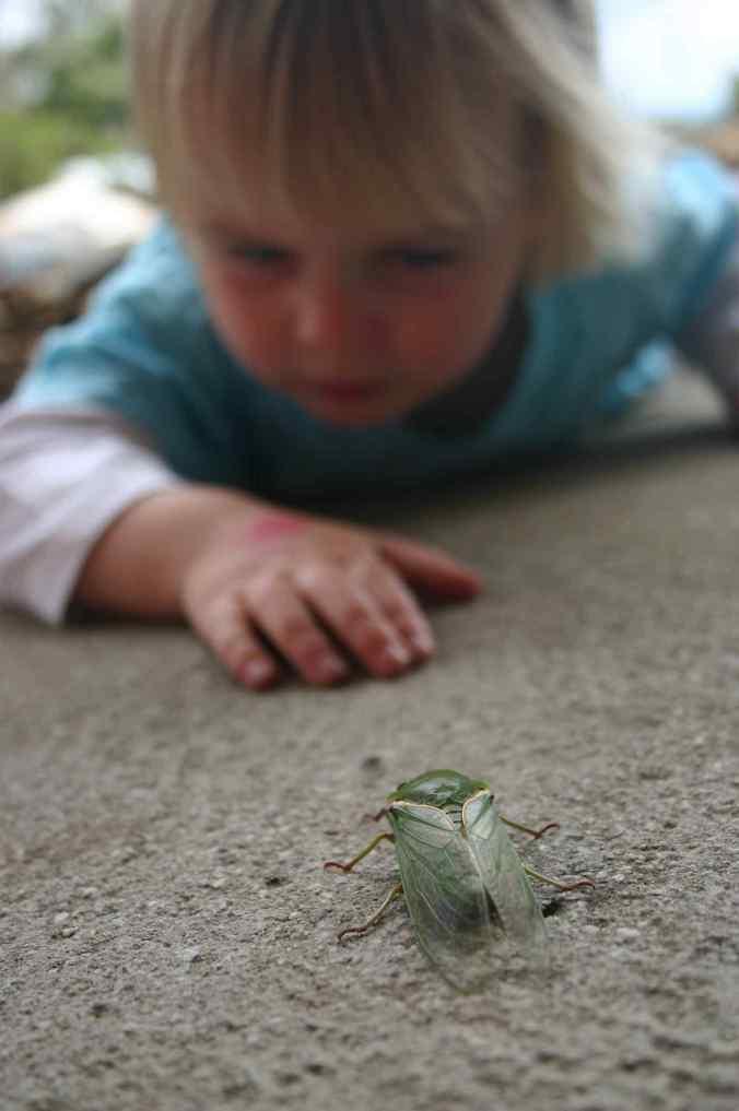 CicadaStalking