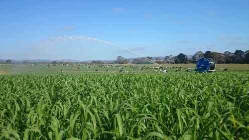 IrrigatorLoRes