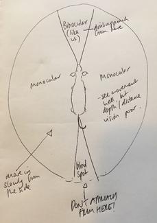 ZVdiagram.jpg